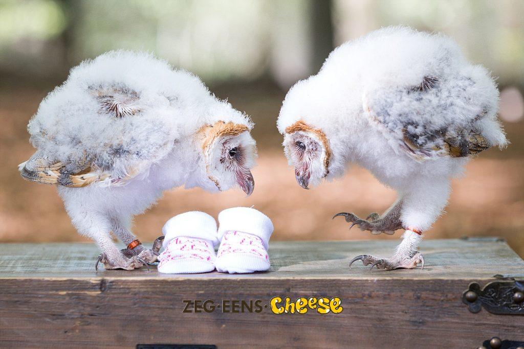 Zwangerschapsfotoshoot_Roofvogels (7)
